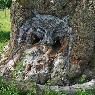 message of owl shows up in tree matrix harmonics